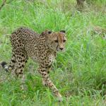 Thaba Tsweni Lodge & Safaris Foto