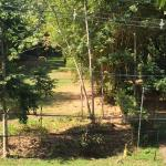 Monkeys walking across to the hostel