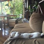 One of the friendly cats