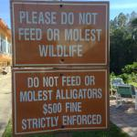 Do not feed the alligators!!