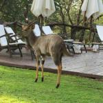 Bilde fra White Elephant Safari Lodge