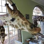 Breakfast at Giraffe Manor!