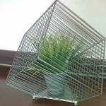 fake plant in cage