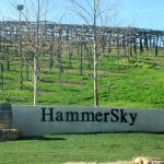 HammerSky Vineyardsの写真