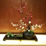 Cute bonsai near elevators and outside function rooms