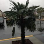 Palm tree in the hotel parking lot