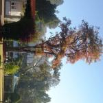 One of the beautiful trees on the hotel property