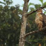 Nature Lodge Kinabatangan Foto