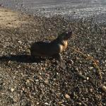 Seal on the shore