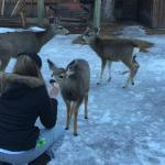 Feeding the deer.