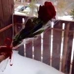 Rose given to me by the hotel on Valentine's Day <3