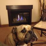 "In-room Fireplace.  ""Now THAT's what a dog (and person) like!"""