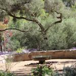 Mesquite Tree and Fountain