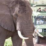 Photo of Heritage of African Jungles Day Tours