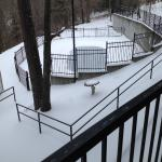 The pool under the snow