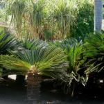 Wonderful tree ferns in the hotel garden