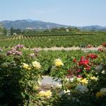 Photo de RUSTIC at Francis Ford Coppola Winery