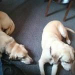 Happy mutts got lots of love in the pub