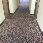 Hallway- I saw some negative comments about hall carpet before booking. Looks ok to us!