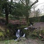 The waterfall and ancient copper beech