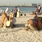 Loved seeing the camels on the beach!