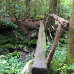 Bridge on the nature trail in the campground