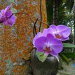 Orchids growing off palm trees
