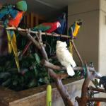 Beautiful parrots in various resort spots