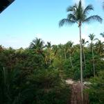 Vue chambre (preffered tropical view)