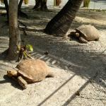 The tortoise pen