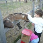 Visiting the animals