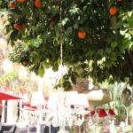 Orange tree decked out with chandelier