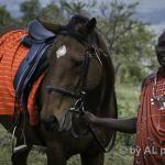 2 new members in Kilima's team: 2 horses. Now let's the training start