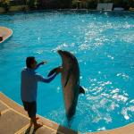 Swim with dolphins are must have activity :)
