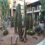 Zdjęcie Embassy Suites by Hilton Hotel Tucson-Williams Center
