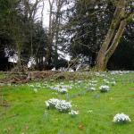 Snowdrops in February -lovely grounds