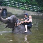 Foto de Elephant Safari Park & Lodge