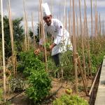 their organic garden and the chef