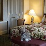 Our Havanese at the Broadmoor