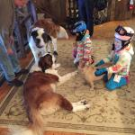 My kids and the saint bernards
