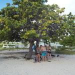 Our shade tree