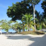 lovely trees on the beach for shade