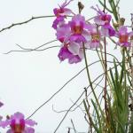 Orchids grow everywhere