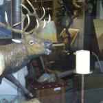 Elk in shop in Jackson. look for the lip marks on the window