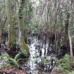 Trails varied and included bayou like areas