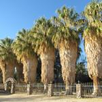 Stately Palms Greet Visitors