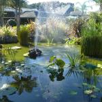Lily pond and fountain in central courtyard