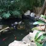 Pond on pathway through the hotel.