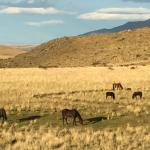 Wild horses grazing around the Hosteria Alta Vista