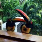 Toucans visited our room every morning!